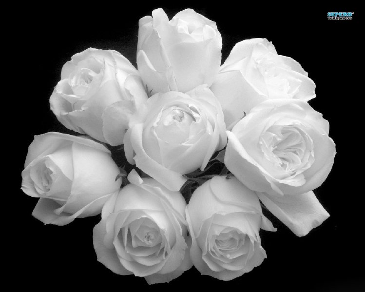 white-rose-bouquet-116-1280x1024